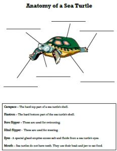 homeschool science curriculum sea turtle