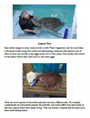 homeschooling science program sea turtles