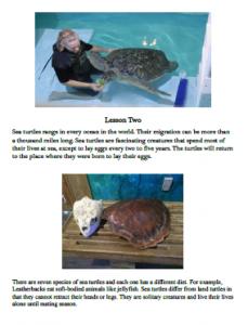 homeschooling science program sea turtles