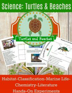 homeschool science sea turtles