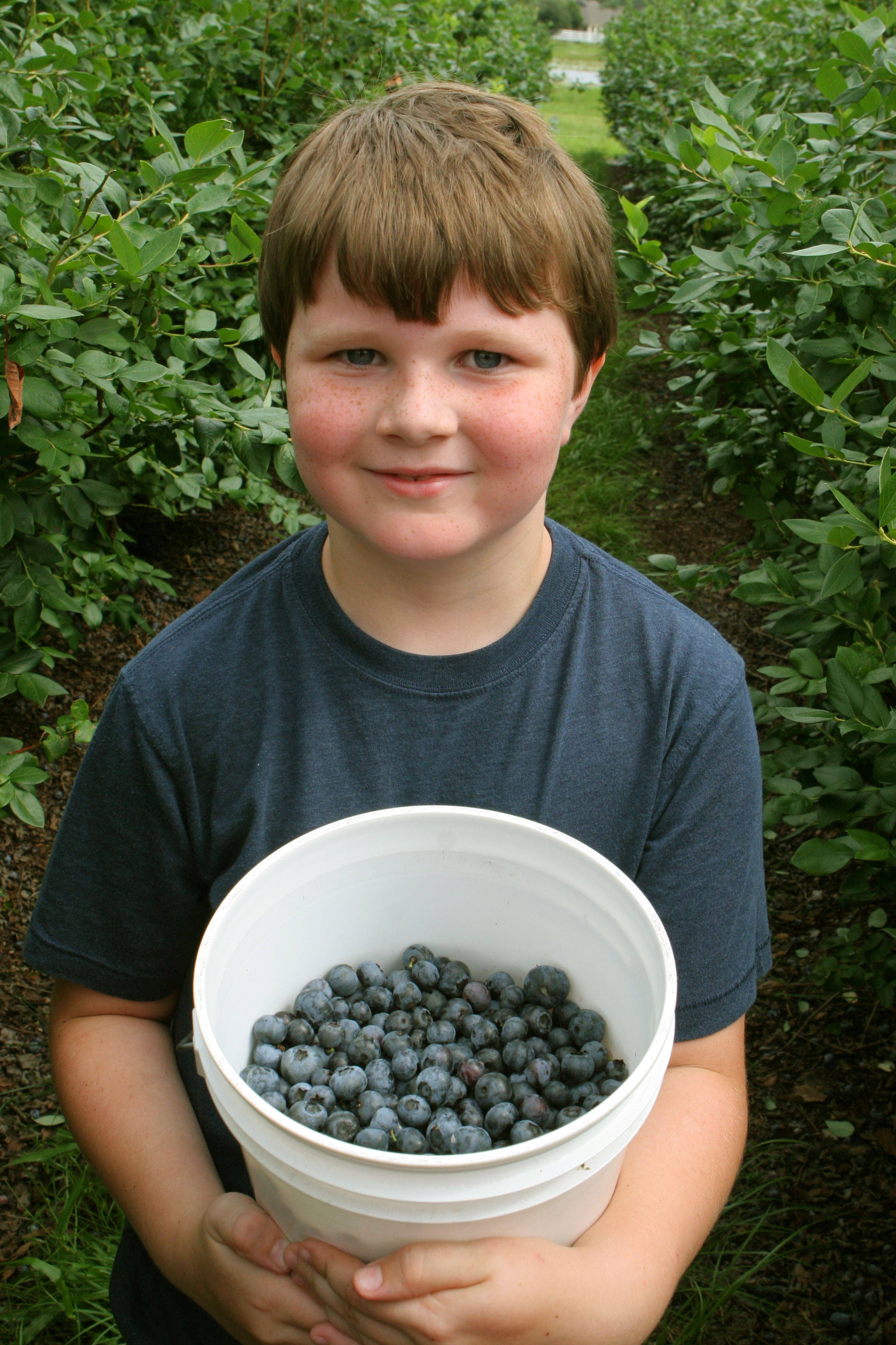 florida blueberries