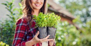 pioneer curriculum gardening
