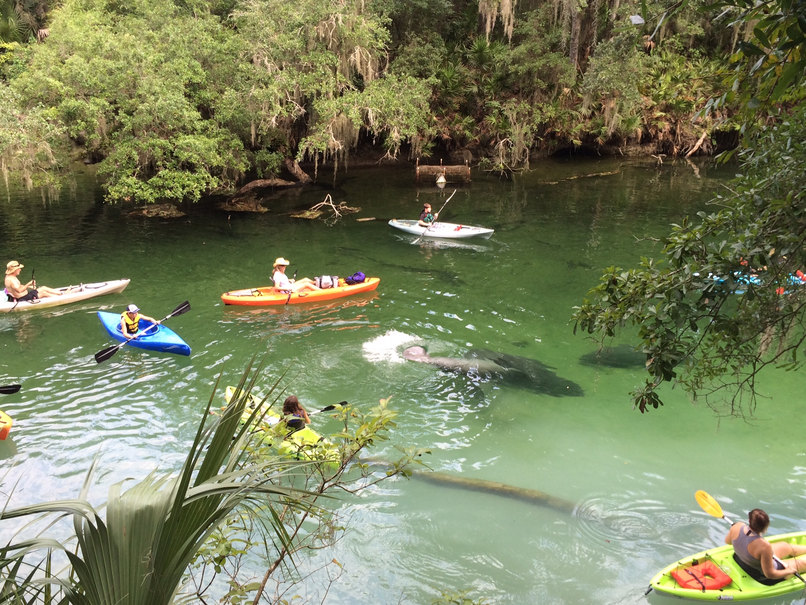 florida blue springs